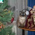 Филя у елки с рождественским ангелом. 31 декабря 2004 г.