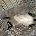 Любовь и нежность - главные принципы в отношениях наших котов Калли и Сёмы. 28 сентября 2011 г.